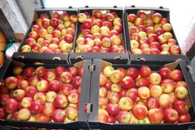 Jabłka kraśnickie