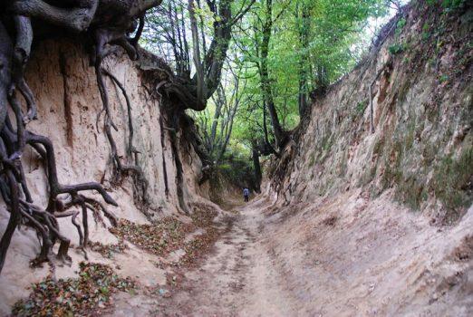 Kazimierski Park Krajobrazowy (fot. Patrycja Stachowska-Szczotka/UMWL)