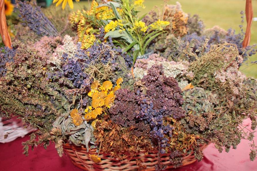 Rybczewice ziołami pachnące