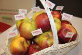Polskie jabłka na stoisku Krajowego Ośrodka Wsparcia