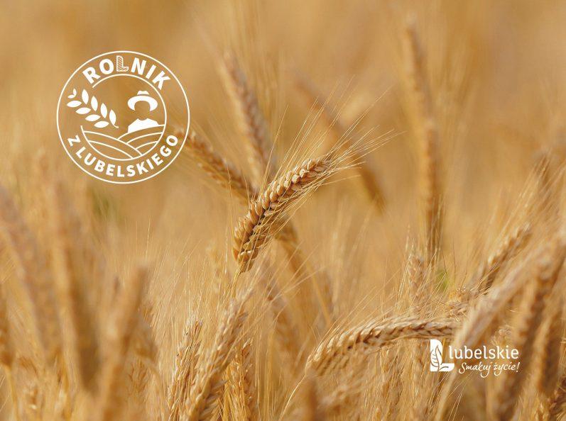 Grafika konkursu, zdjęcie łan zbóż. w górnym lewym rogu białe logo konkursu w formie okrągłej pieczęci. w dolnym prawym rogu logotyp lubelskie smakuj życie.