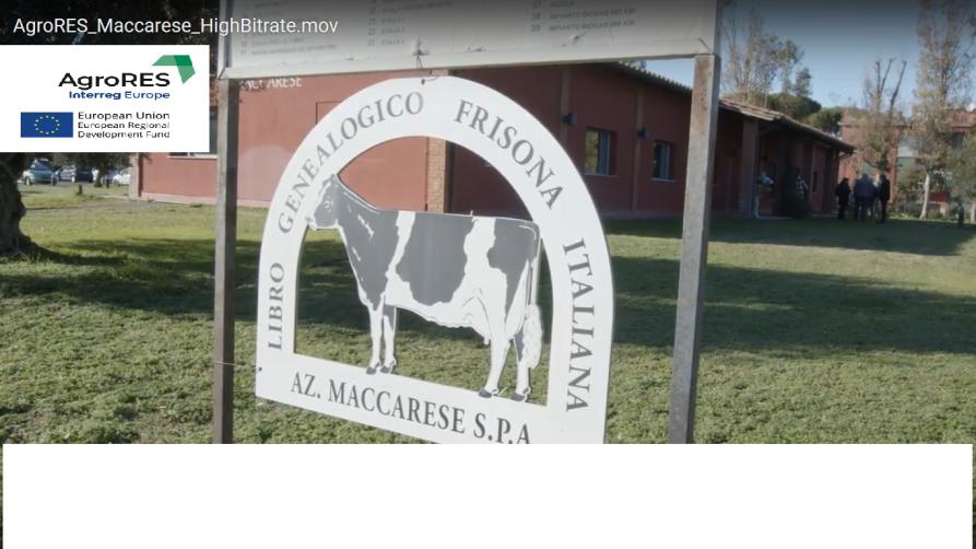 szyld przedstawiający nazwę firmy Maccarese oraz wizerunek krowy