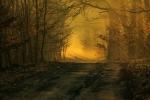 """Wyróżnienie. Dorota Kosik - """"Mglista droga prowadząca w głąb lasu z małym przewodnikiem"""""""
