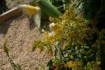 Ziarna i zioła