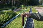 Podczas akcji rozdamy 700 sadzonek przygotowanych przez lubelskich leśników (fot. RDLP w Lublinie)
