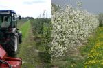 Sady w okolicach Kraśnika. Tutaj produkuje się słynne jabłka kraśnickie