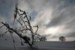 13939030_IIINAGRODA.ZimanapolachwKonopnicy.Fot.WaldemarFrckiewicz