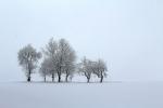 Wyróżnienie. Paweł Bujara, Susiec - Zagubione w śniegu, zimowy krajobraz z Roztocza