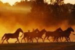 III nagroda. Julia Dunia, Wylągi – Konie i światło:::