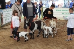 W prezentacjach zwierząt brały udział całe rodziny