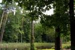 14. Arboretum - Ośrodek Edukacji Ekologicznej Lasy Janowskie (fot. P.Wójcik)
