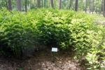 12. Arboretum - 2 -Ośrodek Edukacji Ekologicznej Lasy Janowskie (fot. P.Wójcik)