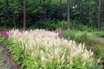 13. Arboretum - 3 -Ośrodek Edukacji Ekologicznej Lasy Janowskie (fot. P.Wójcik)