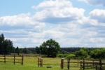 18. Ośrodek hodowli leśnego konika biłgorajskiego w Szklarni - 4- (fot. P.Wójcik)