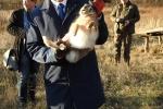 Członek Zarządu Województwa Lubelskiego Sebastian Trojak wziął udział w wsiedlaniu 40. zajęcy do woliery adaptacyjnej w Starym Tartaku, pow. lubartowski